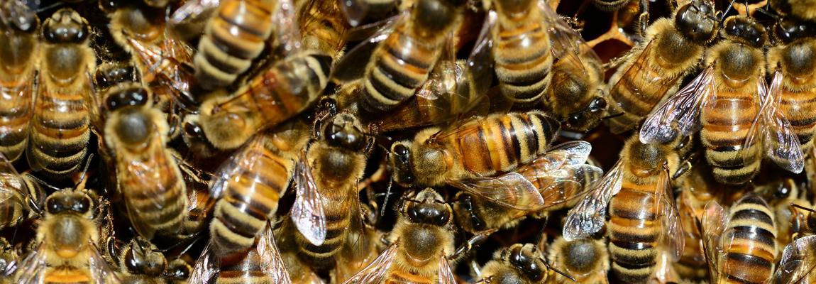 Leben in der Bienenbeute