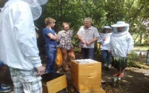Die Erkennung von Bienenkrankheiten